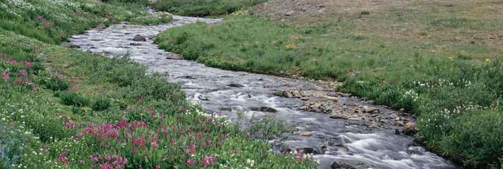 Creek-1050x350
